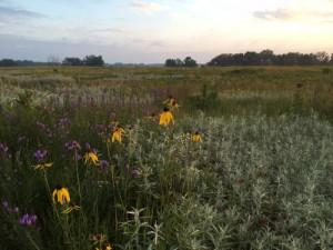 FALL PRAIRIE HARVEST DAY! @ Nygren Wetland Preserve   Rockton   Illinois   United States